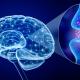 ilustracja graficzna - mózg