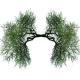 drzewa uformowane w kształt płuc